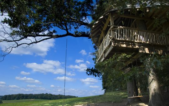 Treehouse Tree Houzz